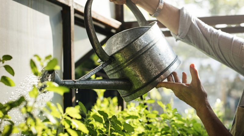 Bevattning odling